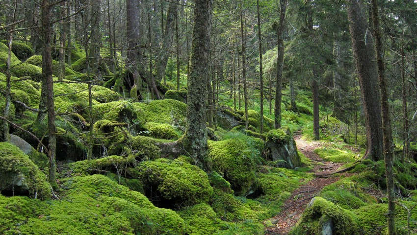 Национальный лес Чероки